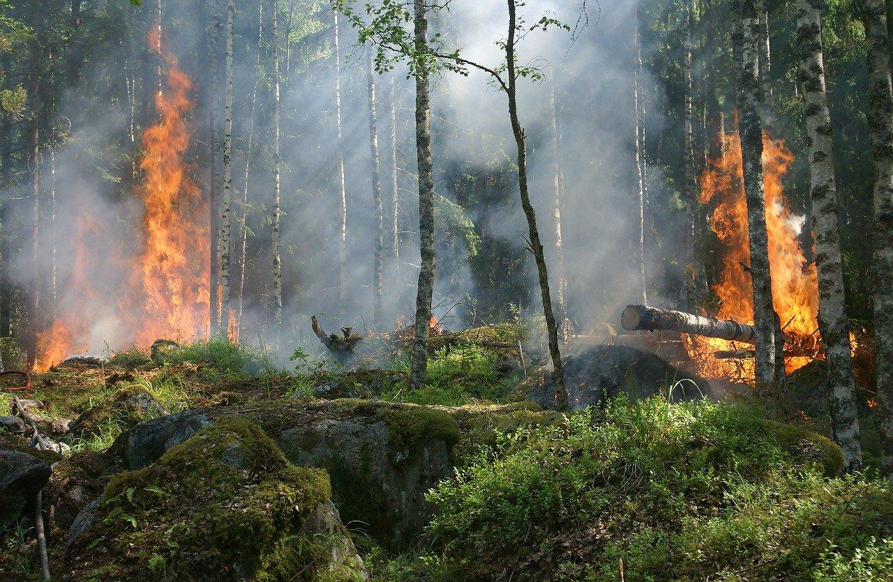 EineWeltBlaBla_Klimakrise